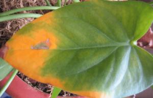 Почему желтеют листья у комнатных цветов и что делать в таком случае