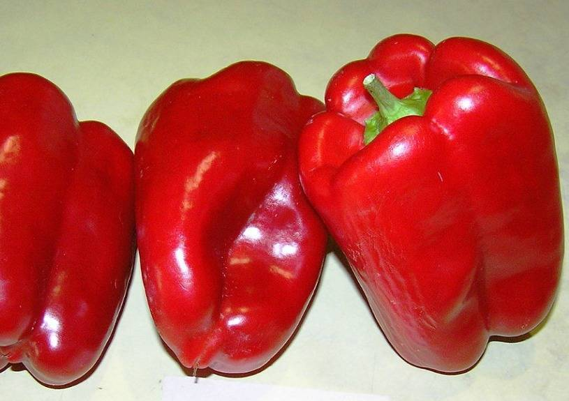 19 сортов сладкого перца: описание, характеристика +отзывы
