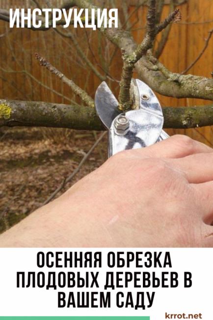 Как правильно обрезать плодовые и фруктовые деревья: схемы и фото обрезки деревьев плодовых