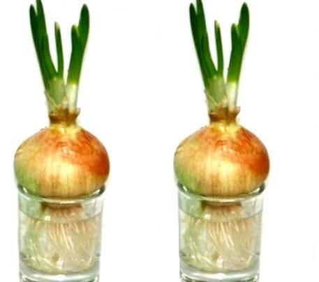 Правила выращивания гидропоники в домашних условиях