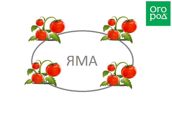 На каком расстоянии сажать помидоры: как определиться со схемой выращивания томатов и промежутком между их рядами и далеко ли друг от друга сеять их семена? русский фермер