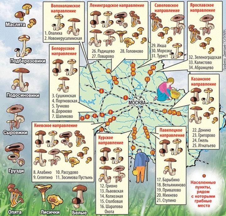 Грибы воронежской области 2021: когда и где собирать, сезоны и грибные места