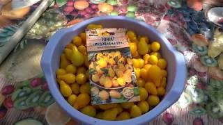 Характеристика и описание сорта помидоров медовая капля