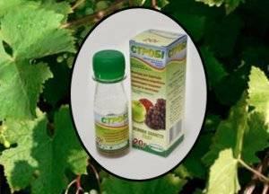 Препарат строби: инструкция по применению фунгицида для винограда