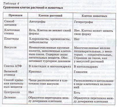 Сходство грибов и растений проявляется в