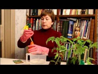 5 важных правил ухода за рассадой перцев после пикировки