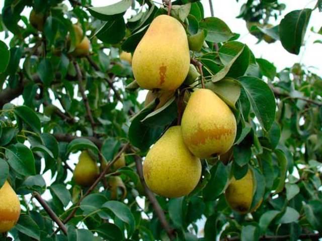 Лимон при грудном вскармливании: пробуем без кислой мины