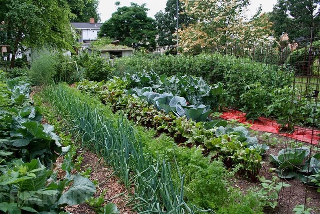 Какие растения улучшают почву