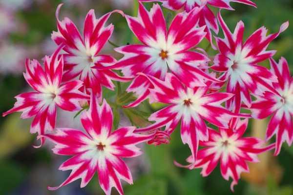 Многолетние цветы для дачи и огорода: обзор неприхотливых сортов с названиями и фото