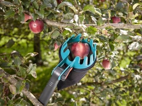 Приспособление для сбора яблок: разновидности, как сделать своими руками