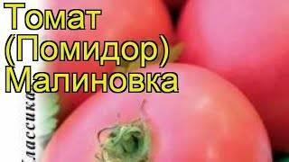 Томат малиновка — описание и характеристика сорта | zdavnews.ru