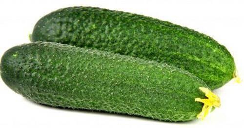 Огурец погребок f1: характеристика и описание гибридного сорта с фото