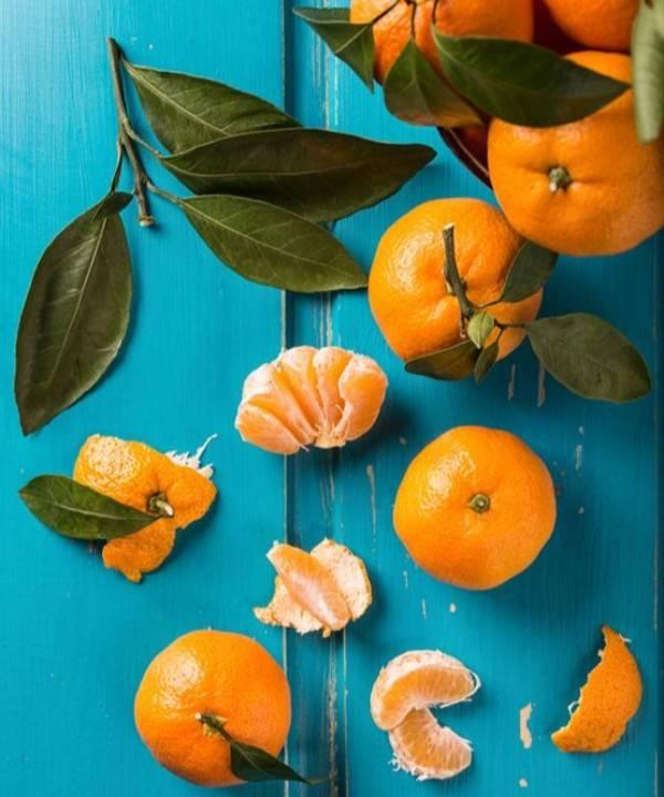 Домашний мандарин: выращивание из косточки, условия ухода