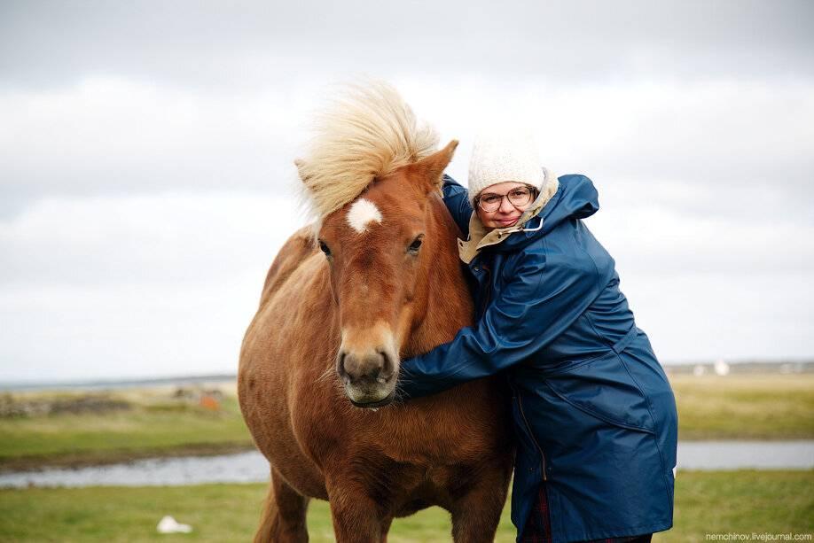 Исландская порода лошадей
