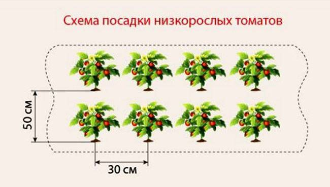 На какую глубину сажают семена помидоров на рассаду?