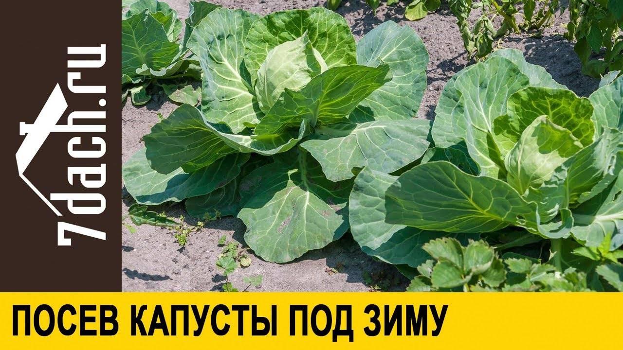 Выращивание рассады перцев по методу юлии миняевой