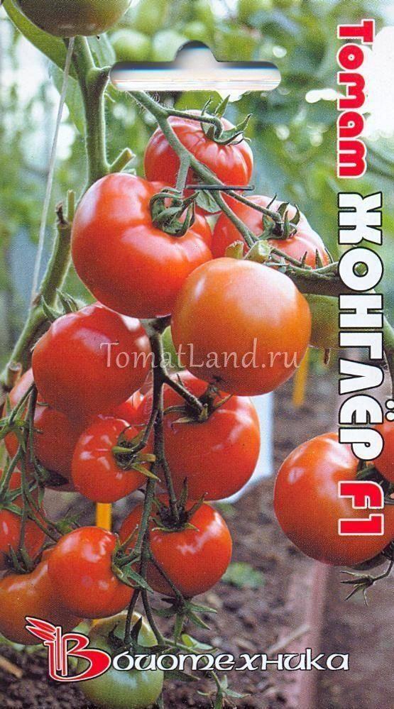 Томат «жонглёр». описание сорта — характеристика урожайности и агротехника посадки, ухода и выращивания помидора (фото)