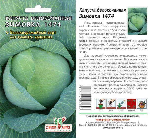 Капуста зимовка: описание сорта, фото, отзывы, характеристики белокочанной капусты зимовка 1474, её урожайность, когда убирать с огорода