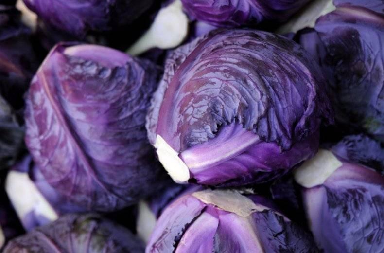 Почему у капусты фиолетовые листья, что делать