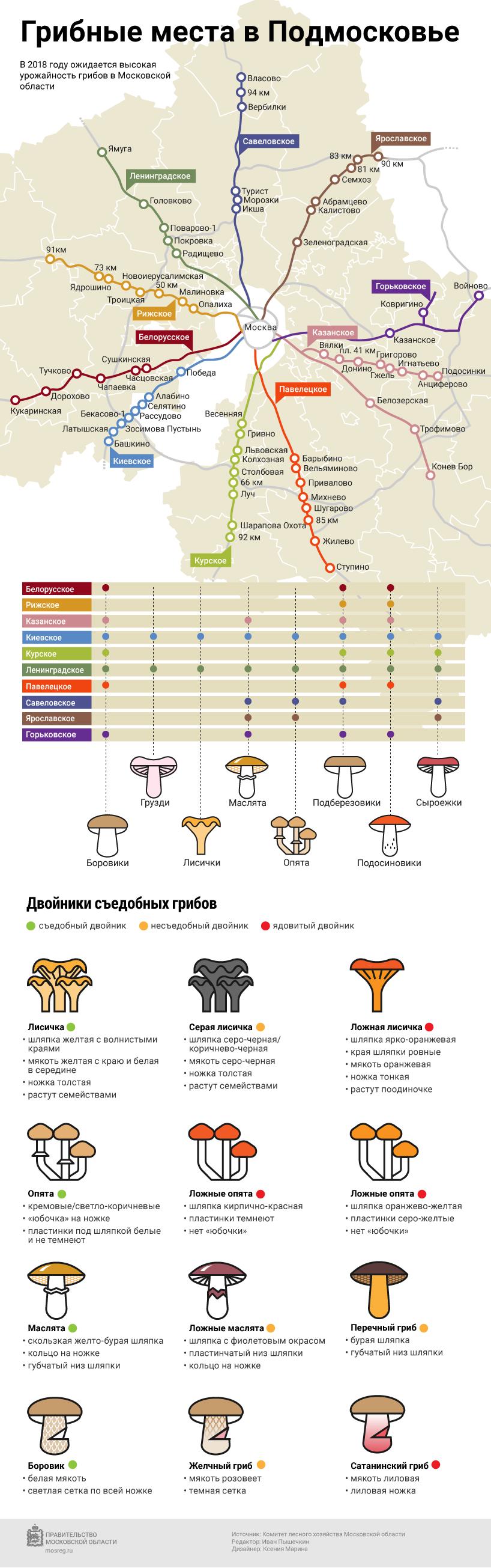 Белые грибы в подмосковье: где собирать и где растут в 2020