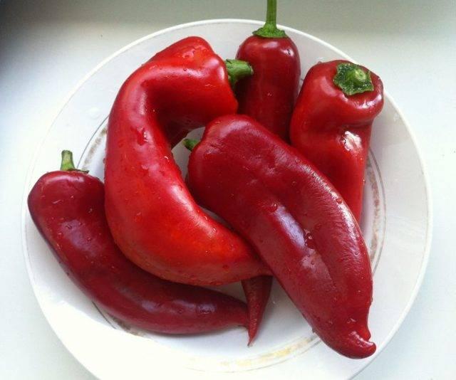 Перец солист: характеристика и описание сладкого болгарского сорта, отзывы об урожайности, фото