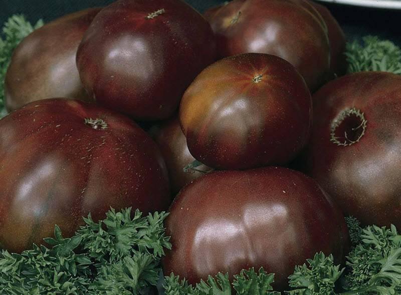 Сортовые особенности томата маруся
