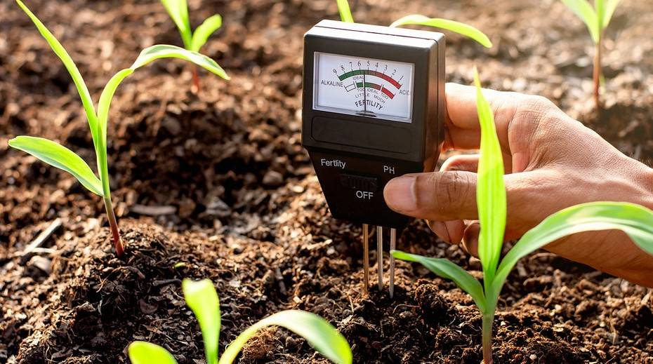 Кислая почва: что это такое и что делать? что закисляет почву на огороде? признаки и химическая мелиорация, удобрения для слабокислой почвы