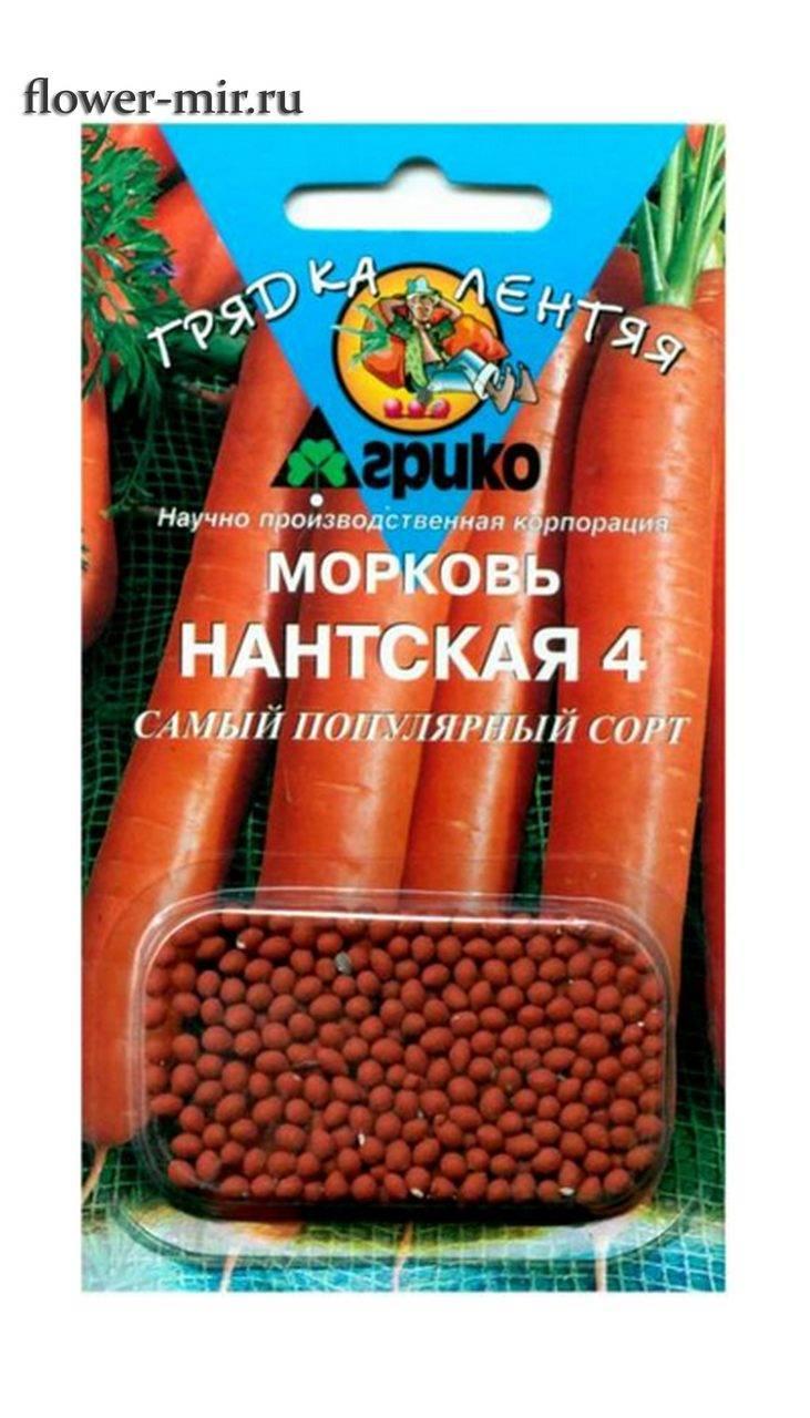 Элитный скороспелый сорт моркови «нантская – 4»: характеристика, подробное руководство по выращиванию