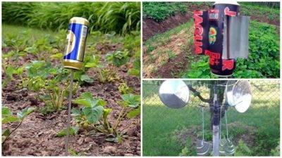 Как избавиться от кротов: на садовом, дачном участке, эффективные методы и народные средства русский фермер
