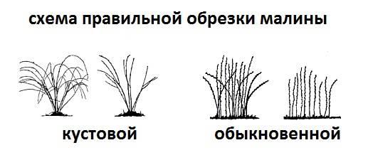 Чем подкормить малину весной и осенью для роста, видео и фото