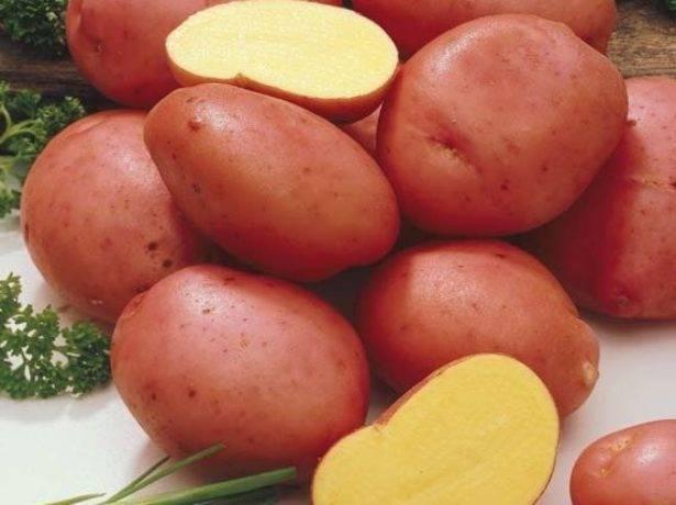 Лучшие сорта картофеля для сибири (западной и восточной): описания и характеристики
