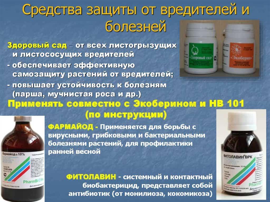 Применение фармайода 10 % на клубнике применение фармайода 10 % на клубнике