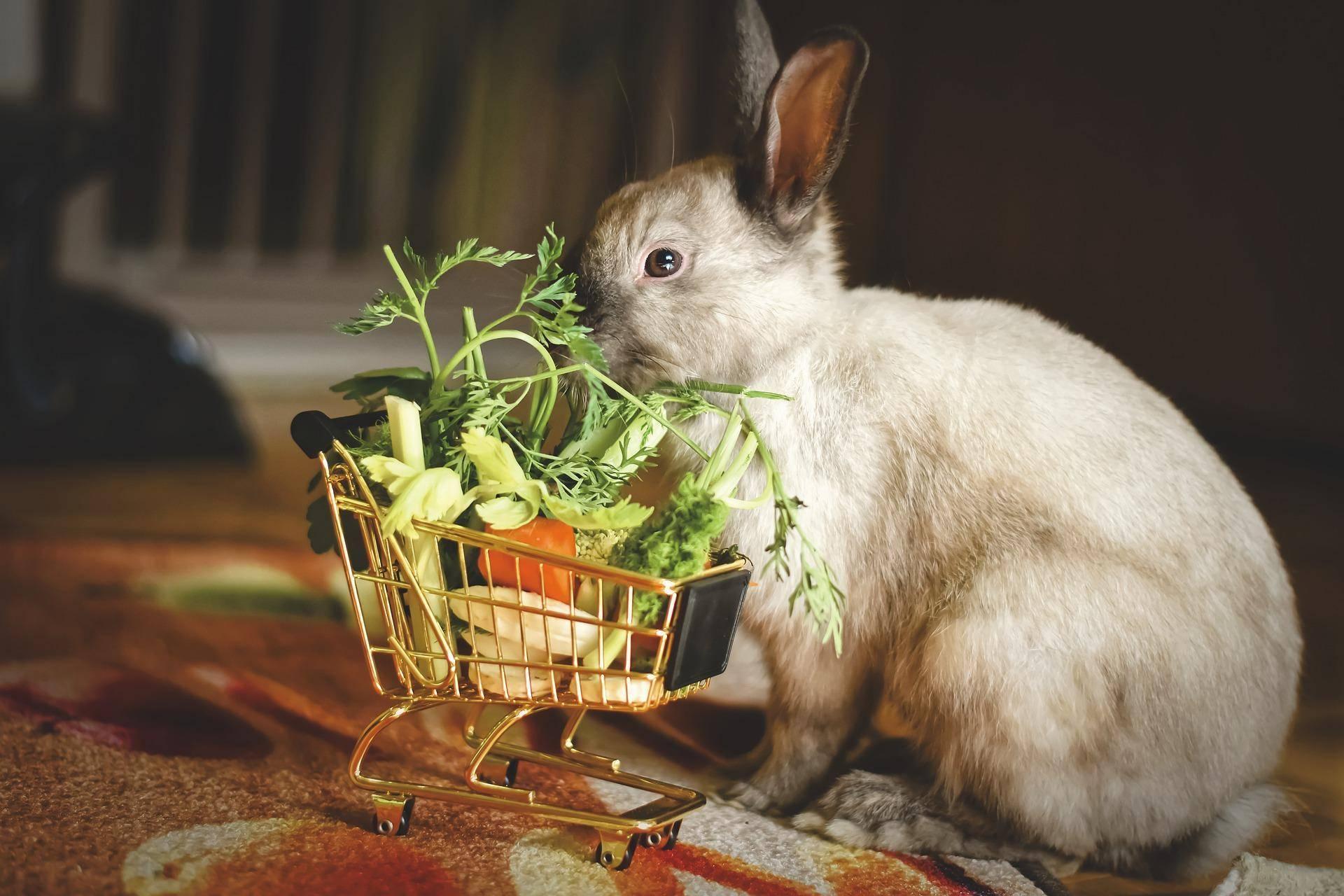 Сколько раз в день кормить кроликов: суточная норма