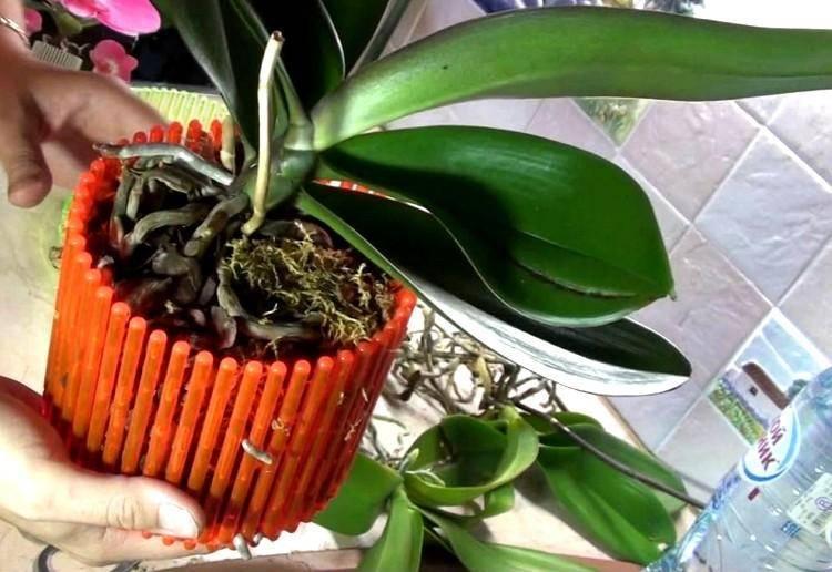 Какими бывают горшки для орхидей и как выбрать лучший из них?