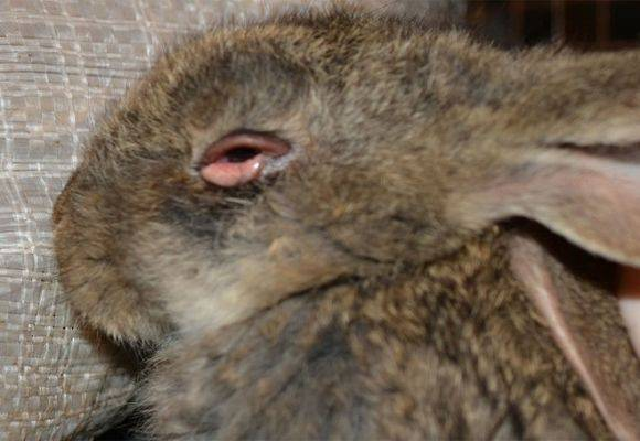 Насморк и слезятся глаза с температурой, чиханием, кашлем: причины, лечение | компетентно о здоровье на ilive