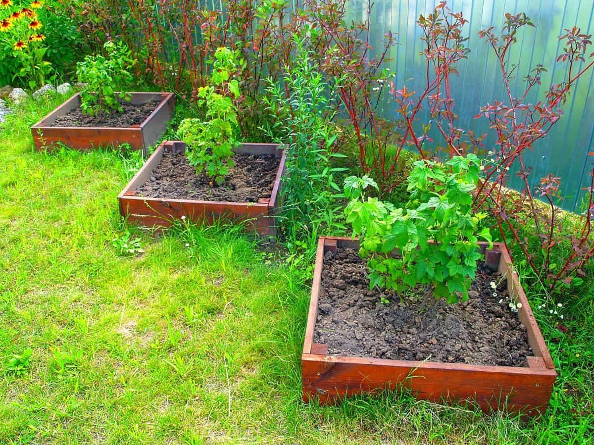 Посадка смородины красной, когда и как это делать, а также где разместить растение на участке