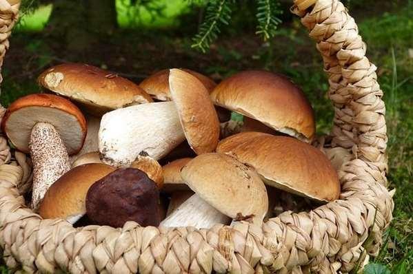 Червивые грибы – как правильно чистить и можно ли есть