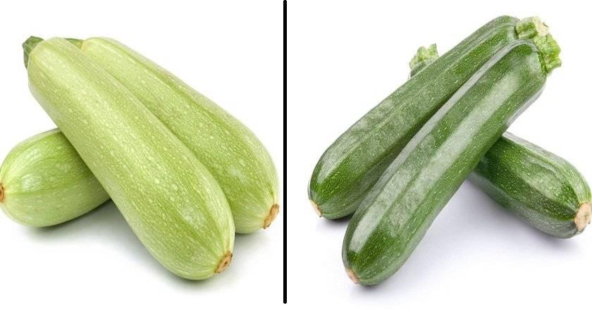 Цукини и кабачки: чем отличаются по вкусу и внешнему виду