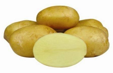 Сорт картофеля джелли: описание и характеристика овоща, фото, советы по посадке и уходу, борьбе с болезнями и вредителями