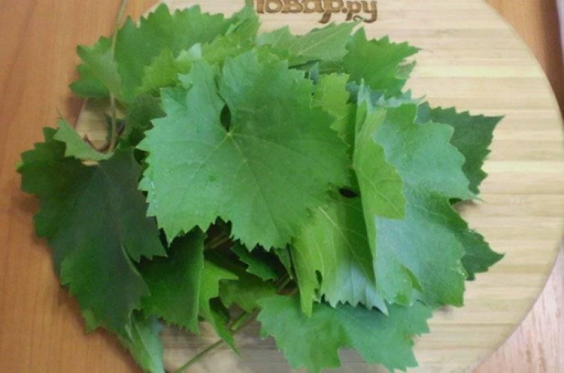Польза и область применения виноградных листьев