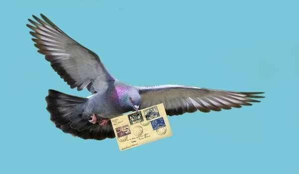 Голубиная почта как работает, полет почтового голубя (фото и видео)