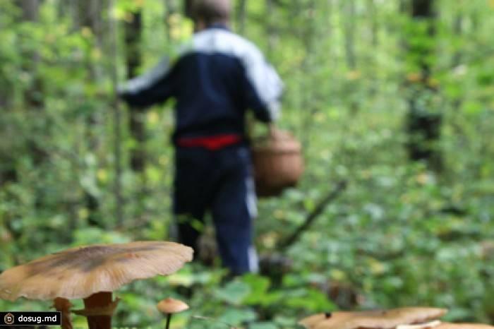Как правильно собирать грибы   методы сбора грибов   советы грибников