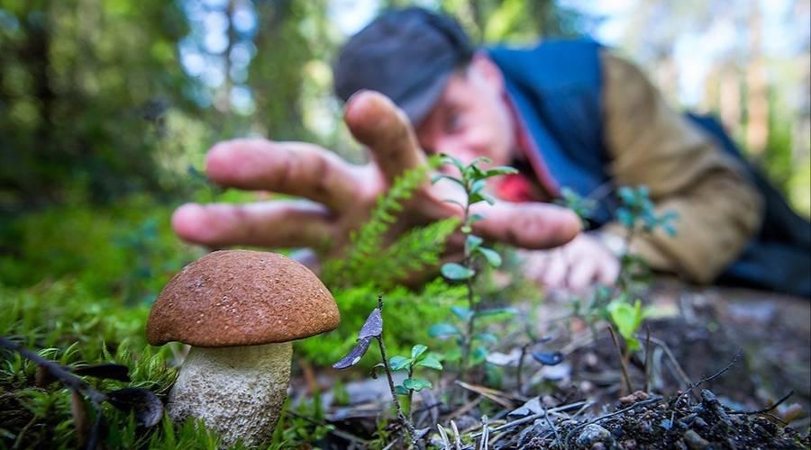 Опята - 70 фото о том как отличить ложные грибы от съедобных