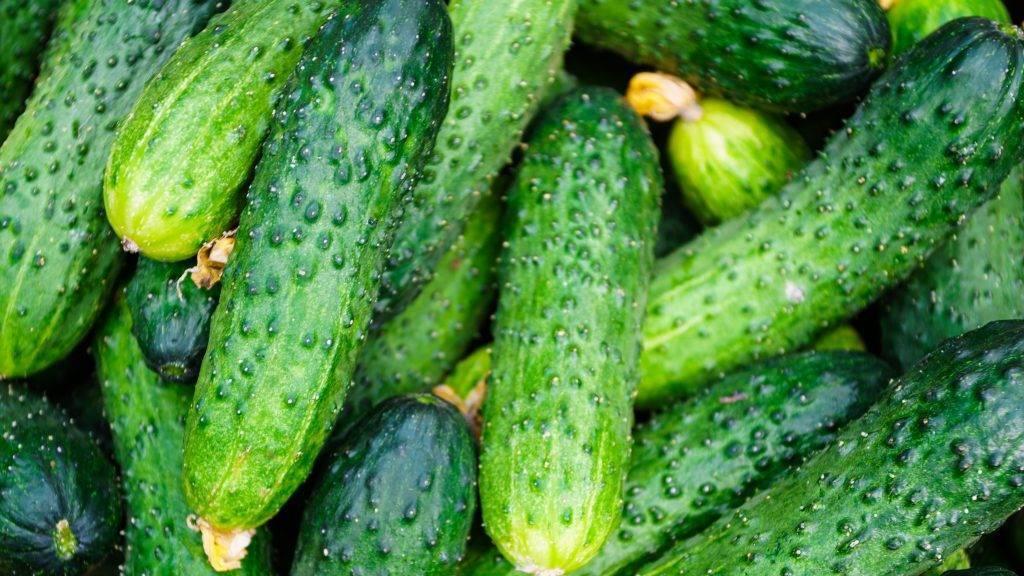 Лучшие сорта огурцов для засолки и консервирования для теплиц и открытого грунта: отзывы, характеристика и описание, урожайность, фото, особенности выращивания