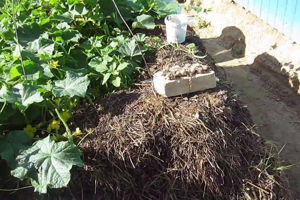 Преимущества использования кроличьего навоза как удобрения для огорода