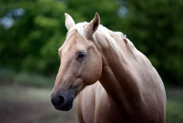 Сколько лет живут лошади: интересные факты и видео сколько лет живут лошади: интересные факты и видео