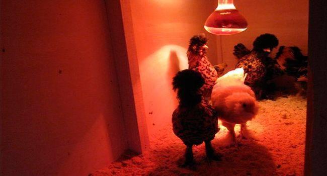 Инструкция по использованию инфракрасных ламп для обогрева курятника