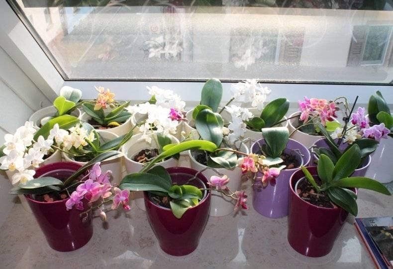 Глиняный грунт Серамис для выращивания орхидей