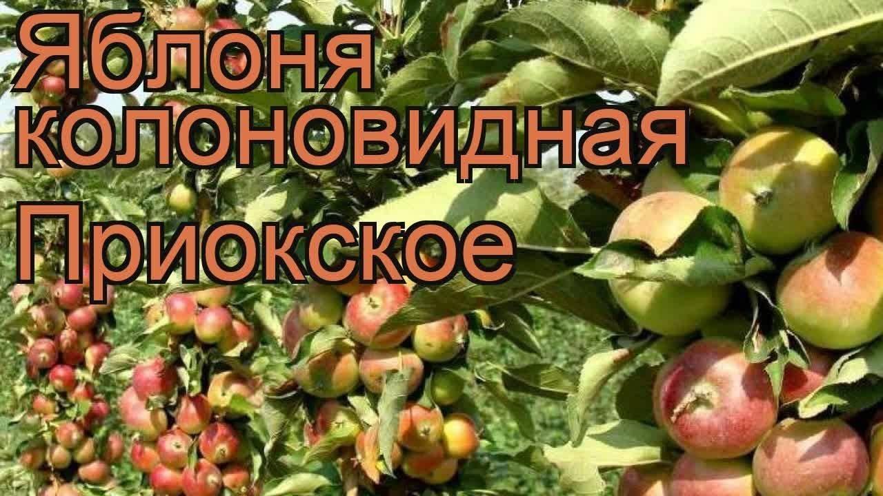 Яблоки с розоватой мякотью сорт
