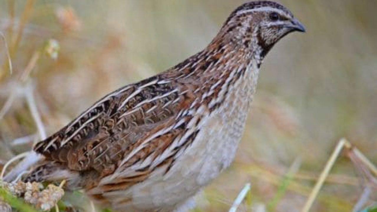 Как использовать птичий помет в качестве удобрения для огорода?